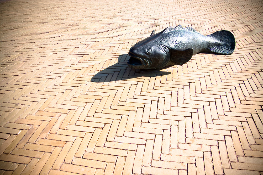 Fish-on-Land-7185
